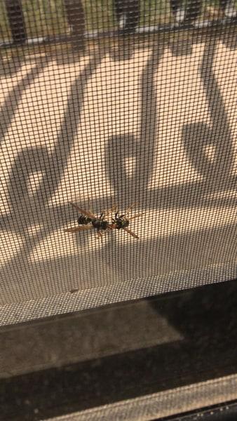 Hornets are feeling safer than ever