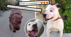 From Covered In Blood To Cuddlebug! Moira The Maltese Dog Has Made A Remarkable Recovery And Is Now Looking For A Home