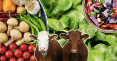 The Ultimate Guide To Turning Vegan In Malta