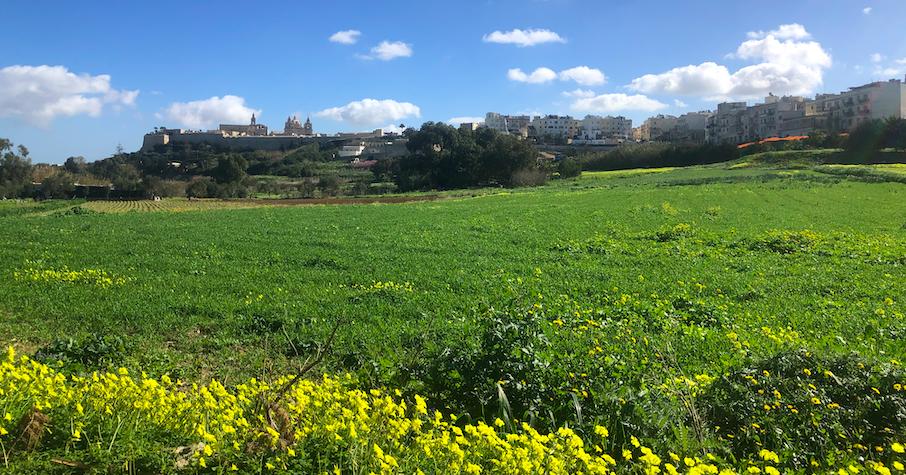 A view of Mdina from Balzan Gera's field